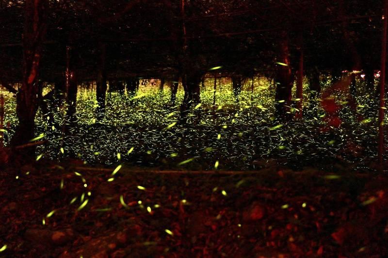 那瑪夏「螢河」盛況。(陳其邁臉書,照片拍攝:前金區三川里長莊晉勳)