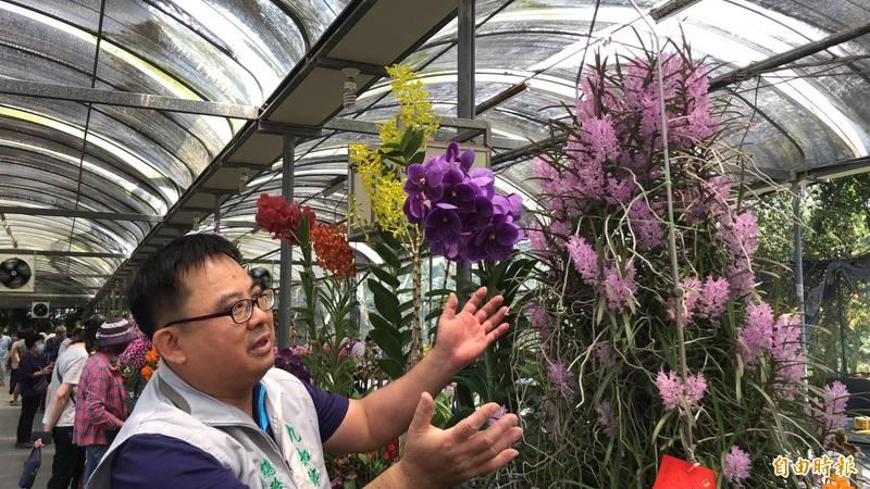 蘭展主辦人龔泰文表示,獲得上帝公獎的千代蘭起碼要種植15年以上,茂盛且全開,相當不容易。(記者羅欣貞攝)