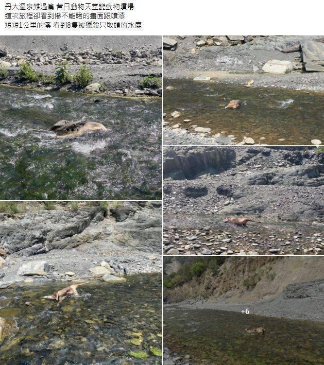 遊客感嘆丹大溫泉成了動物墳場。(圖翻攝自「台灣溫泉探勘網」臉書)