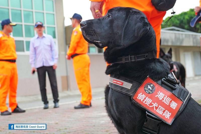 10位海巡毛小孩通過培訓,正式成為合格的「海巡偵搜犬」。(圖取自海巡署長室 Coast Guard臉書)
