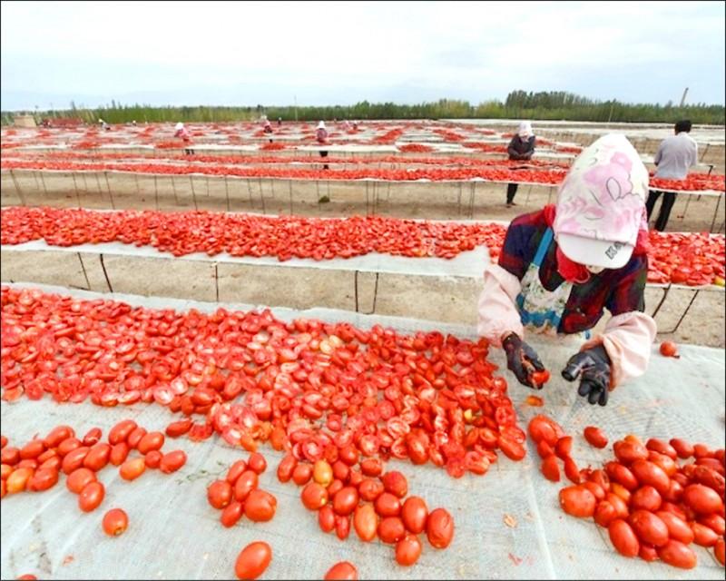 日本番茄醬大廠可果美公司因人權問題,已停止進口新疆番茄。(法新社檔案照)