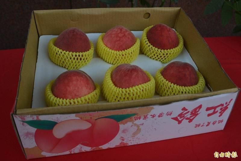 太平農會推廣種植新品種「紅鈴」水蜜桃,具有早熟,且色澤粉紅、果香濃郁,口感鮮甜多汁等優點。(記者陳建志攝)