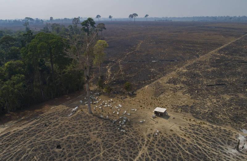 世界自然基金會表示,進口牛肉、大豆等產品,間接導致林地面積萎縮。(美聯社檔案照)