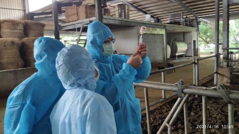 新竹縣牛結節疹預防注射工作隊今(16日)起兵分4路展開施打,爭取明天完成轄內2100隻牛的預防注射,以確保牛隻健康安全。 (新竹縣政府提供)