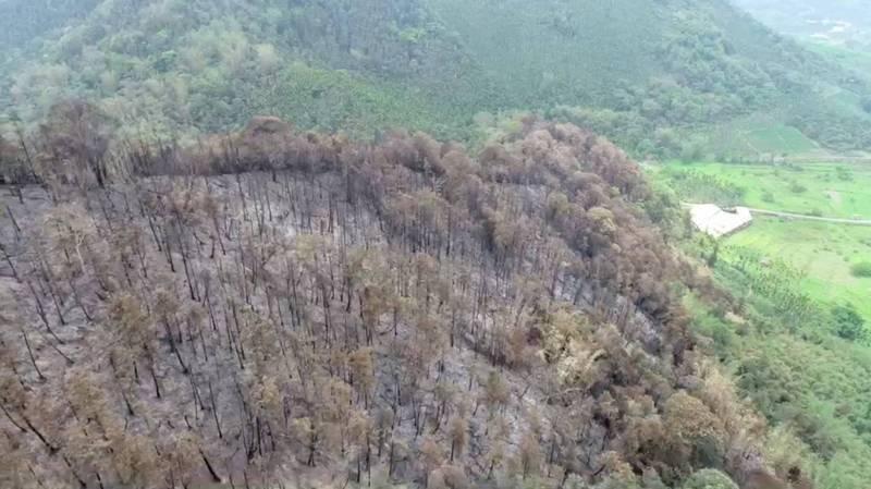 南投縣魚池山林大火撲救5天終於完全熄滅,空拍可見翠綠山林完全失色變樣,怵目驚心。(林務局提供)