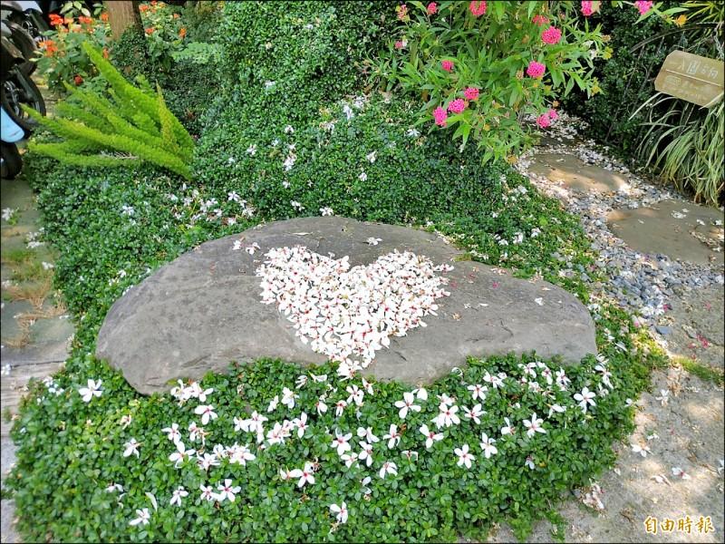 嘉市圓林仔社區油桐花盛開,花朵鋪路成地景。(記者丁偉杰攝)