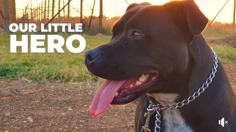 勇救同伴的狗英雄傑西。(圖擷取自臉書@Byron Thanarayen)