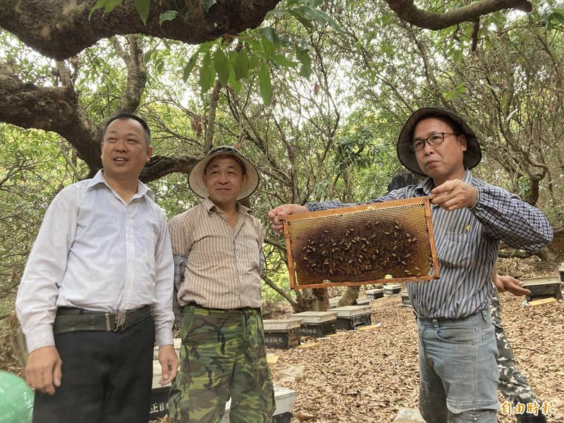 少了荔枝椿象肆虐,蜂農今年收成有提高但沒有想像中的大豐收。(記者顏宏駿攝)