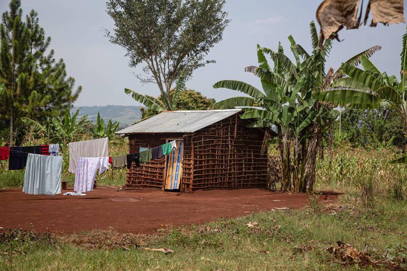 非洲烏干達阿嬤疼孫「餵喝草藥」強身,幾天後5童痛苦掙扎死亡。示意圖。 (彭博社)