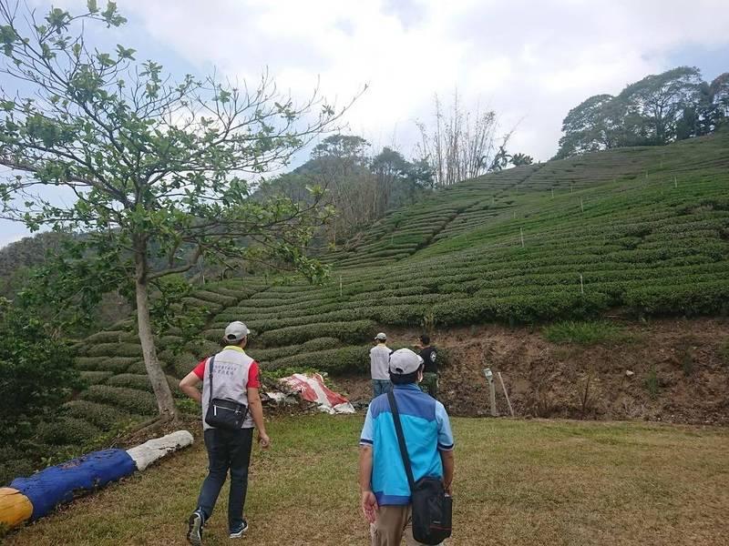 久旱不雨,茶樹農損。(市府提供)