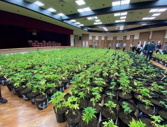 禮堂內一片綠油油全是大麻,令人稱奇。(記者鄭景議翻攝)