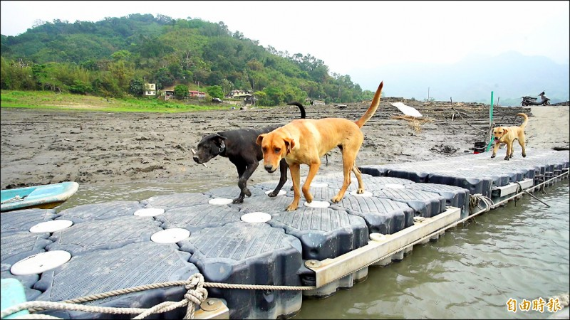 集水區上游薑母島因碼頭四周佈滿淤泥,無法利用船隻進出。(記者李容萍攝)