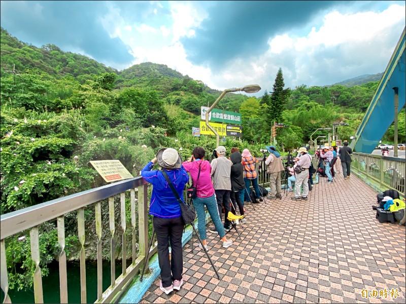 坪林的鷺鷥繁殖季每年吸引許多民眾前來觀賞。(記者翁聿煌攝)