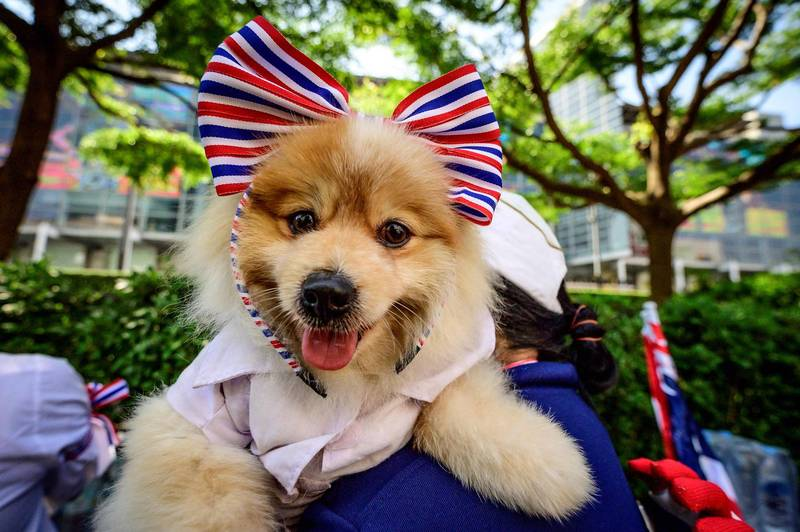 美國一隻狗狗在當地高中的接力賽亂入,最後「贏下」比賽。示意圖。(法新社資料照)