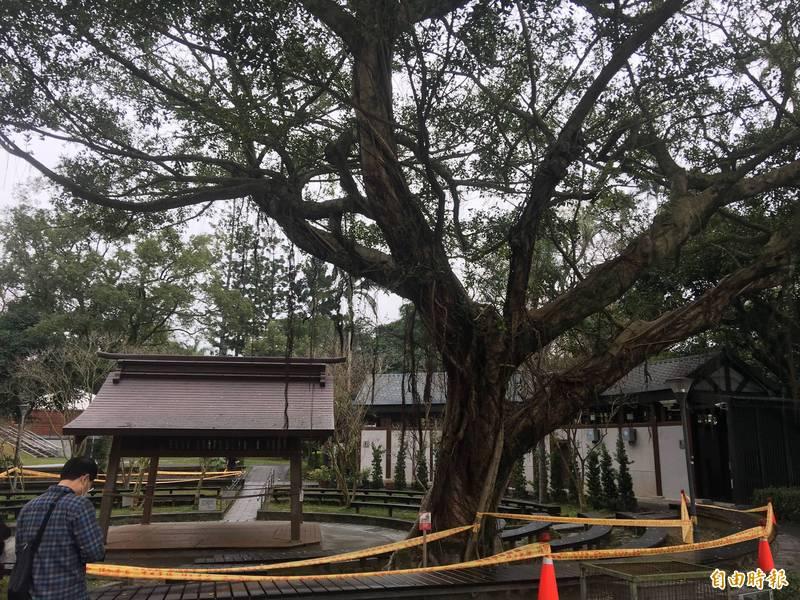 網友說,婚前住的老家邊有棵5層樓高的大榕樹,有天大榕樹來託夢,一回去才發現其他大樹已被砍掉。(示意圖,資料照)