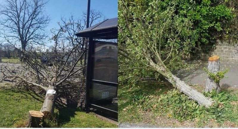 英國鄉村近1個月內出現鋸樹狂,總計有35棵被砍斷導致人心惶惶。(圖擷自Elmbridge Beat推特)