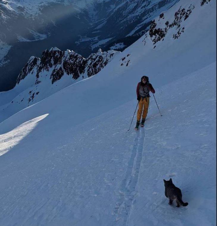 瑞士海拔3073公尺的布里斯滕山平地城鎮有1隻貓咪失蹤,疑似在2天內跟著不同的登山客攻頂3次。(圖擷自「Cyril Rohrer」IG)