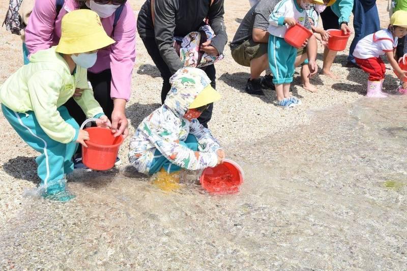幼兒園學子放流虎斑烏賊,全面復育海洋資源。(澎湖縣政府提供)