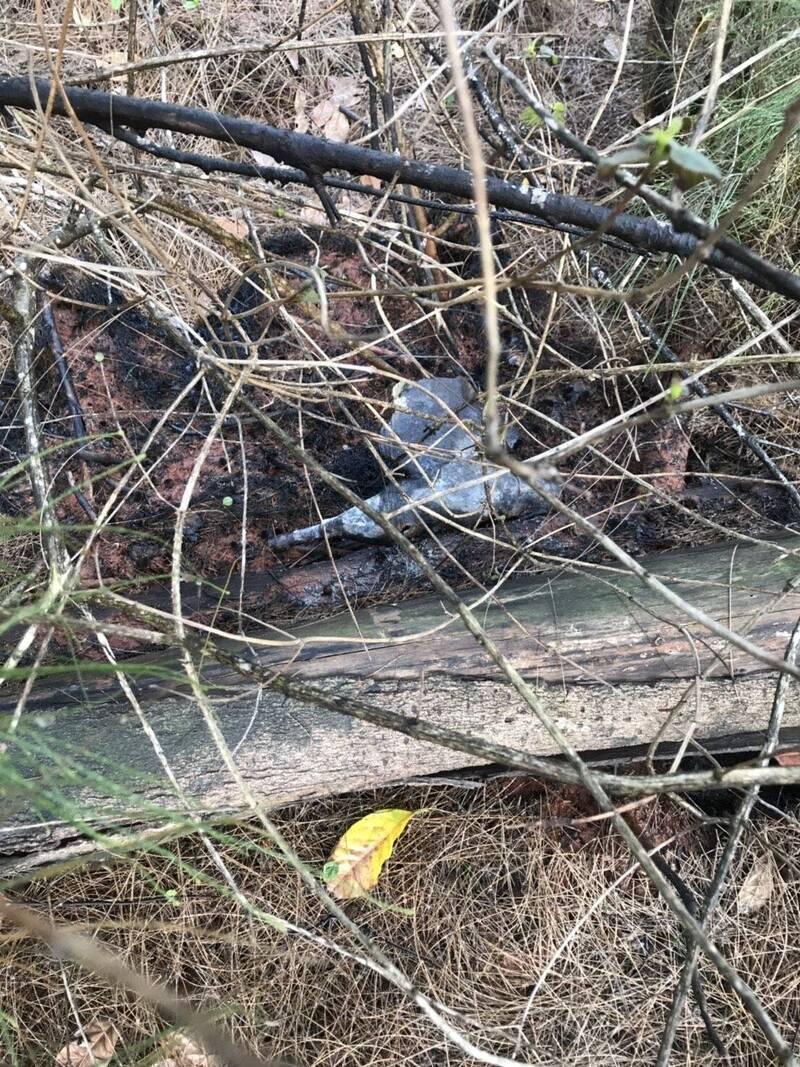 一枚疑似黃磷彈的殘體留在燃燒後的林地中。(金門縣消防局提供)