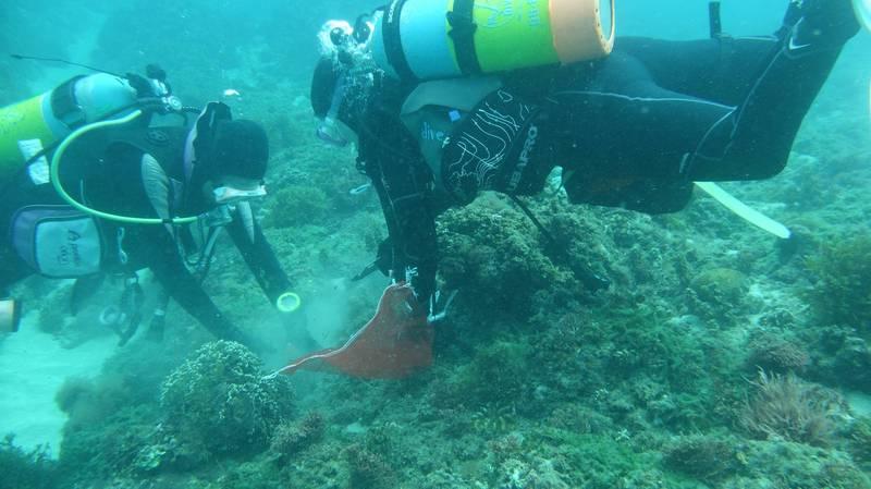 百人清潔珊瑚「產房」,墾丁大規模淨海迎接珊瑚產卵。(墾管處提供)