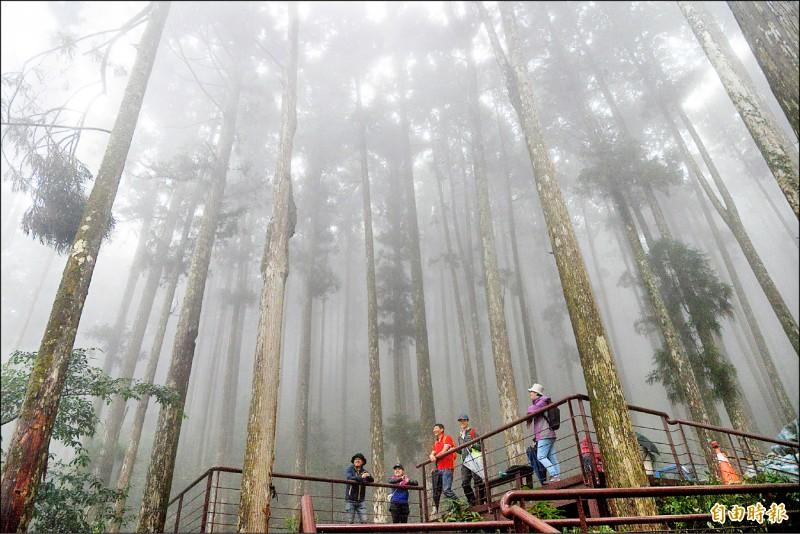 高雄市桃源區的藤枝國家森林遊樂區7日將重新開放,入園採預約制,每日限500人。(記者許麗娟攝)