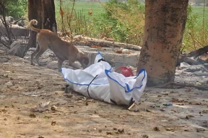 有印度民眾目睹野狗啃食等待火化的染疫遺體。(圖取自推特)
