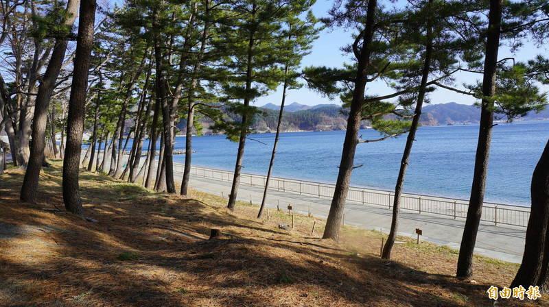 釜石市鵜住居町的白砂青松,原本長約2公里的松林,經過海嘯摧殘僅剩50公尺。(記者林翠儀攝)