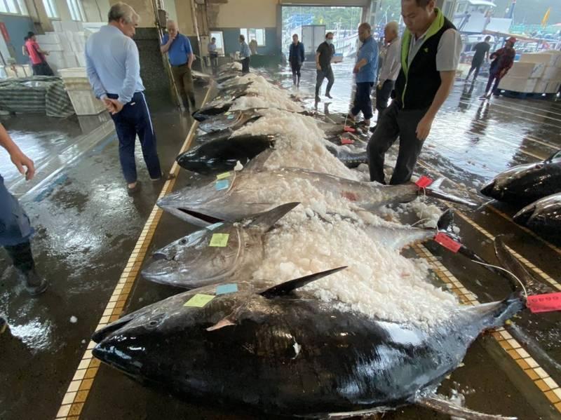 蘇澳地區漁會魚市場今年黑鮪拍賣數量已有105尾。(圖由蔡源龍提供)