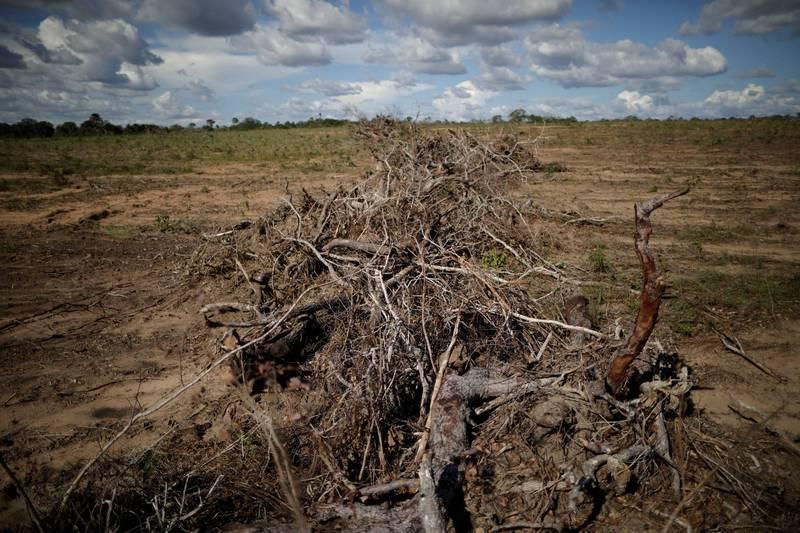 中資銀行被踢爆大規模資助全球雨林濫伐業者,與中國政府宣告對抗氣候變遷背道而馳。(路透檔案照)