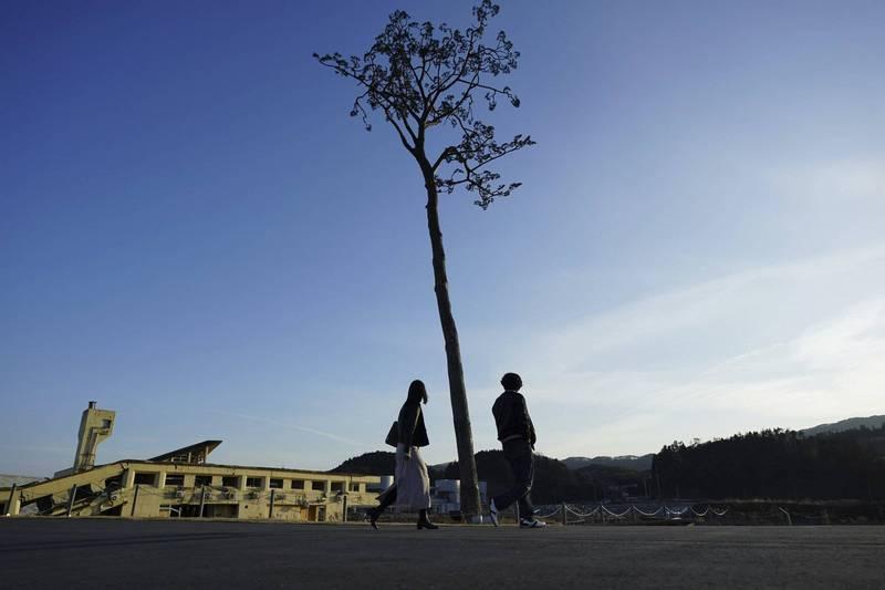 311東日本大震災海嘯冲走岩手縣陸前高田市的高田松原7萬多棵松樹,僅一顆倖免於難,被稱為「奇蹟一本松」。(美聯社)