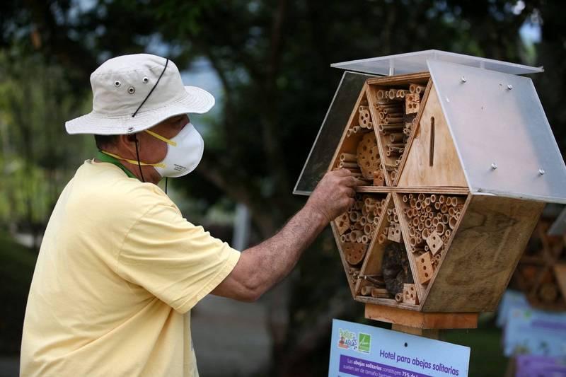 哥倫比亞阿布拉河谷的大都會區(Aburra Valley Metropolitan)政府日前為蜜蜂打造洞狀小旅館。(路透)