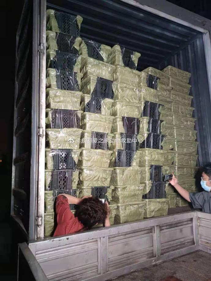 中國四川出現不肖業者販售「寵物盲盒」,大量貓犬被塞進貨車運送。(圖擷取自微博)