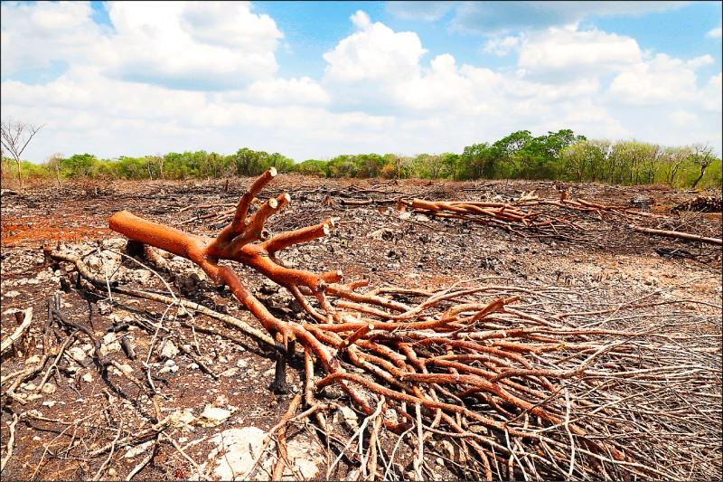 非政府組織調查顯示,中國政府雖矢言對抗氣候變遷,但仍縱容中資銀行持續貸款給參與森林濫伐的企業。(美聯社檔案照)