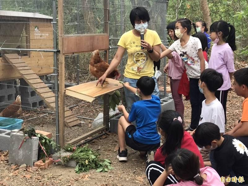 高雄全國首創校園養雞,深水國小打頭陣,學生學習生命教育。(記者陳文嬋攝)