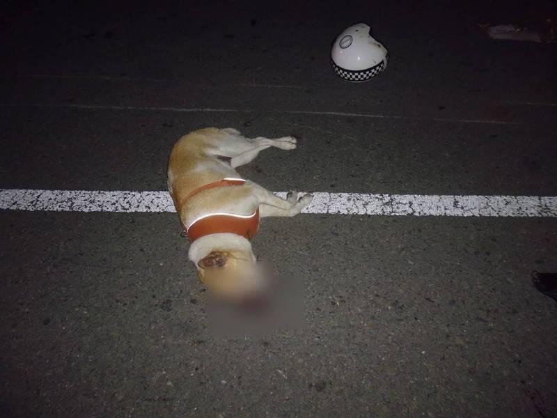 狗狗不幸當場死亡。(記者洪定宏翻攝)