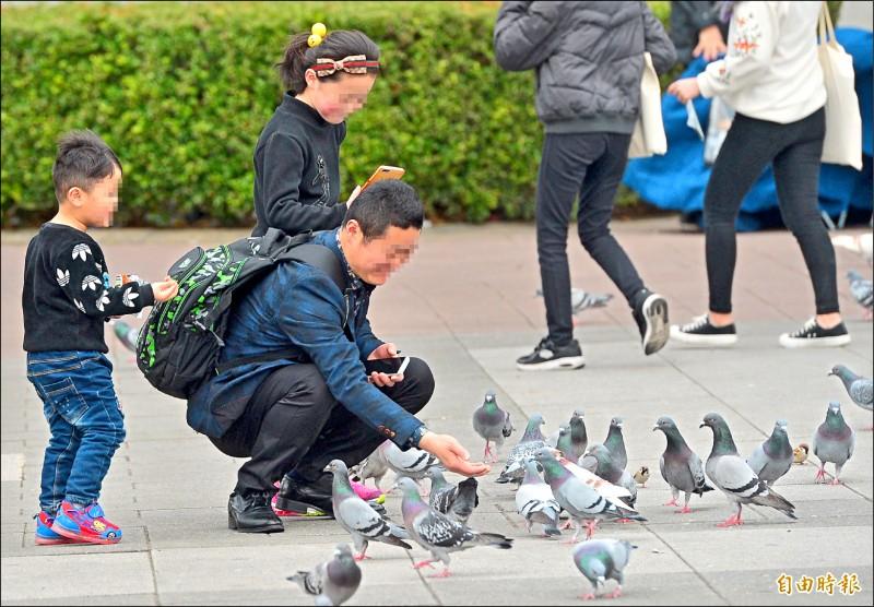 台北市6月1日起全市公園禁止餵食野生動物,第二次勸導不聽者,將處1200至6000元罰鍰。圖與新聞事件無關。(資料照,記者王藝菘攝)