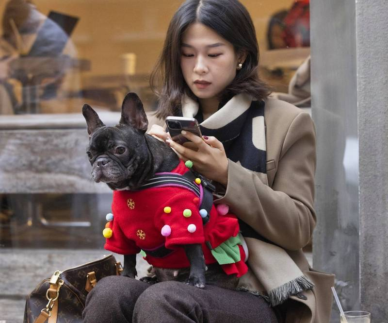 把中國學生比喻成狗?! 美使館一則貼文讓中網友氣炸