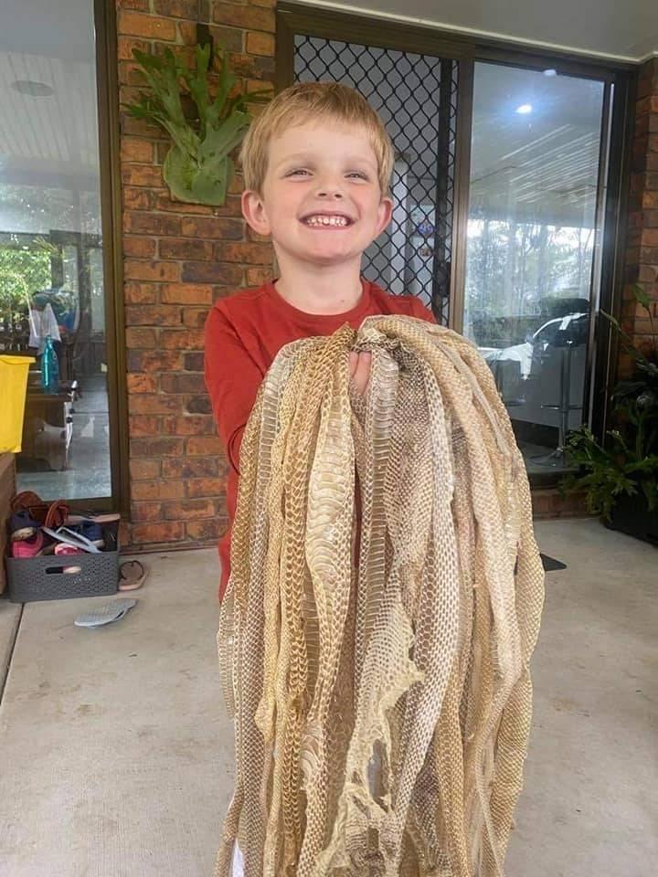 澳洲捕蛇專家在民宅發現50張蛇皮,小孩卻充滿好奇超開心。(圖擷取自「Sunshine Coast Snake Catchers 24/7」臉書)