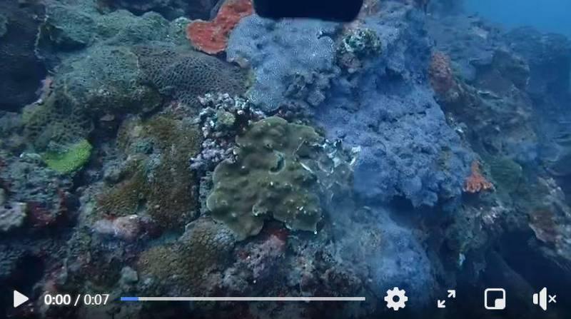 有沒品的潛水客在東北角龍洞灣浮潛時,沒有考慮水下狀況就隨便丟鉛塊,不僅傷及珊瑚礁,也差點傷到其他潛水客。(圖擷取自爆怨2公社)