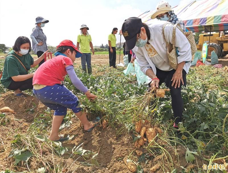 台南新市區農會舉辦「囍蕃妳」地瓜田間體驗,讓大小朋友歡度不一樣的母親節。(記者吳俊鋒攝)