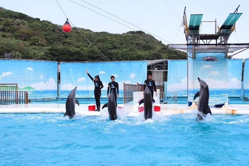 新北市萬里區野柳海洋世界為老牌的樂園,園區提供高空跳水與海豚表演,為北海岸遊憩場所。(圖為野柳海洋世界提供)