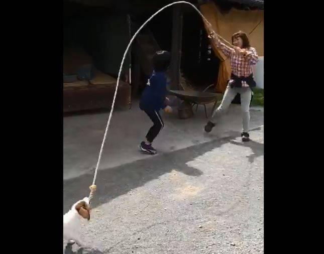 日本網友透露自己家的小狗會幫忙甩跳繩,模樣相當逗趣。(圖取自推特「@ fumiya_5150」)