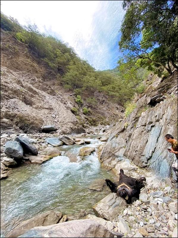 花蓮卓溪鄉大分溫泉附近的拉庫拉庫溪床,被泡湯的登山者發現一頭台灣黑熊陳屍溪床,遺體已開始腐爛。(擷取自台灣溫泉探勘網)