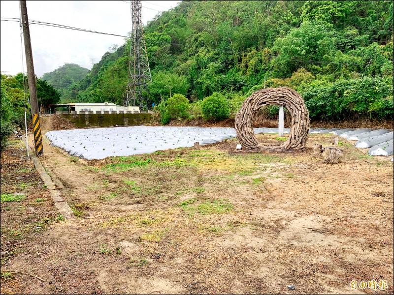 推廣在地農產、觀光,獅潭新鳳橋打造仙草園。(記者蔡政珉攝)
