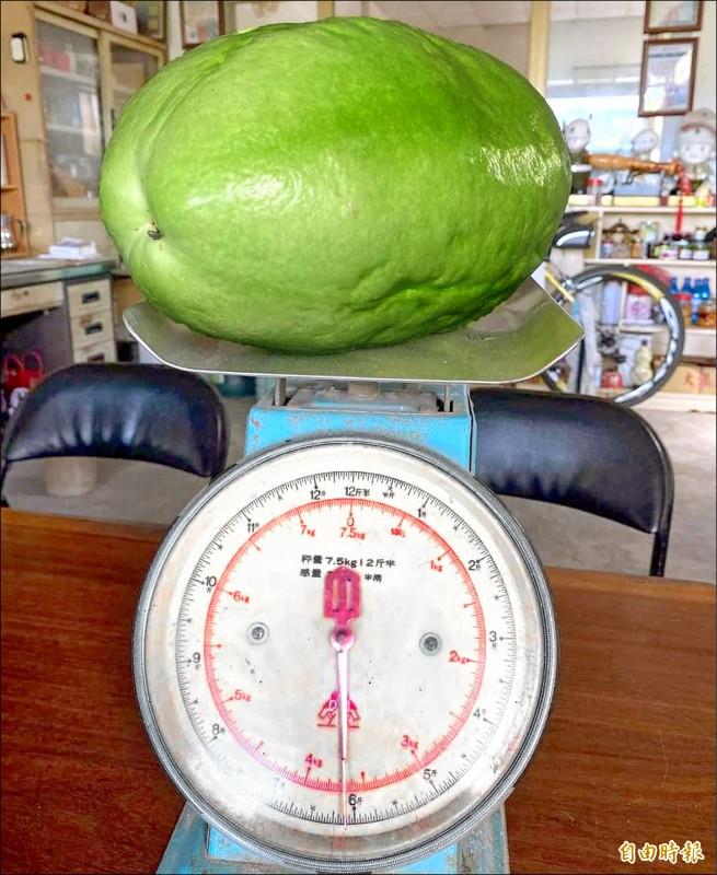 6斤重百香果,不輸冬瓜及西瓜。(記者謝介裕攝)