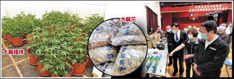 嘉義檢警查獲大麻栽種場,查扣大麻植株2615株、大麻花成品21.7公斤,昨展示查緝成果。 (記者丁偉杰攝、嘉義地檢署提供)