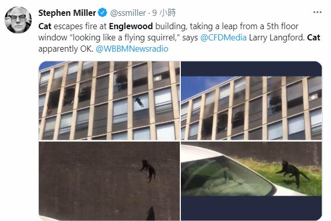 美芝加哥大樓失火,黑貓被迫跳樓掀驚呼,所幸平安無事。(圖擷取自推特)