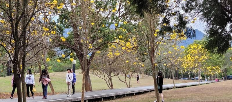 國立暨南大學四季有不同的花木盛開,吸引眾多遊客入校,為加強防疫,宣布即日起暫時關閉校園,謝絕訪客入校。(暨大提供)