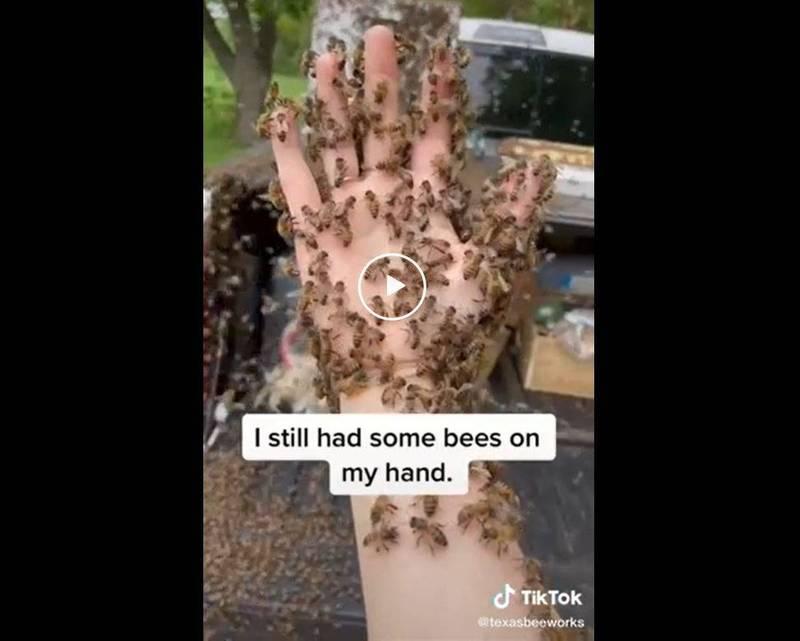 正妹被蜜蜂襲擊仍不害怕,一招解決危機。(翻攝自Reddit)
