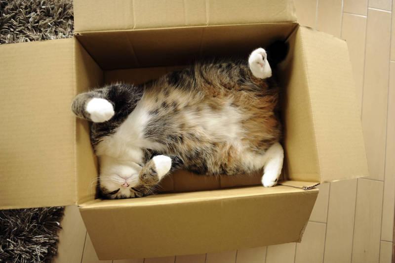 為什麼貓咪對紙箱情有獨鍾呢?美國科學家來解密。(美聯社)